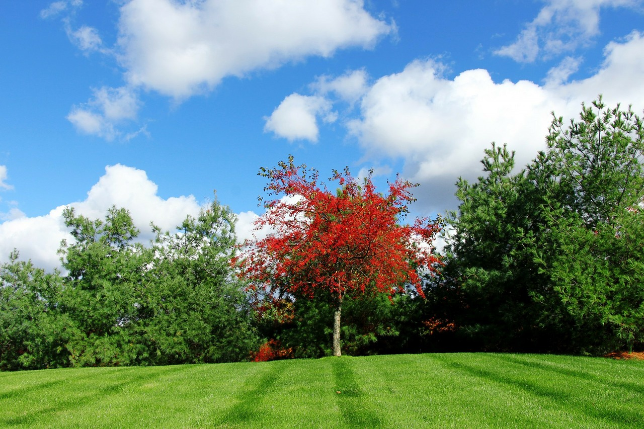 red-tree-220133_1280